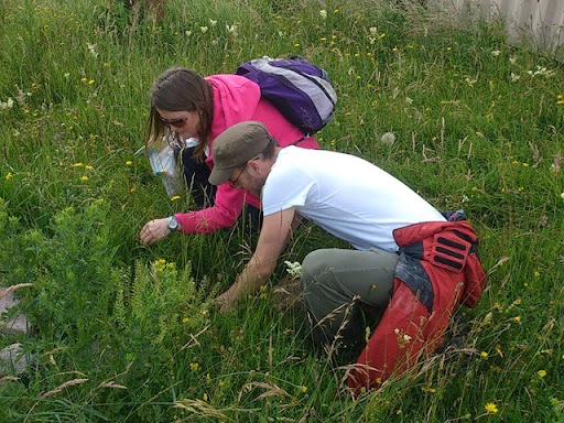 Keiron and Vicky hunting for earthworms on Salisbury Plain