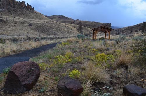 juniper logs at the Clarno unit picnic area