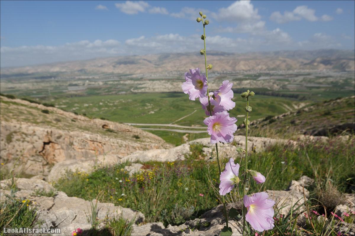 LookAtIsrael.com - Ручей (нахаль) Талкид | Nahal Talkid | נחל תלקיד