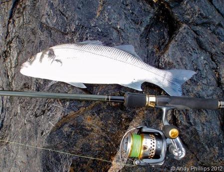 Cornwall Fishing 2012_14