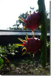 2011-09-10 埔里 040
