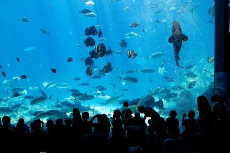 Georgia Aquarium 0