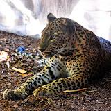 biopark-leopard.jpg
