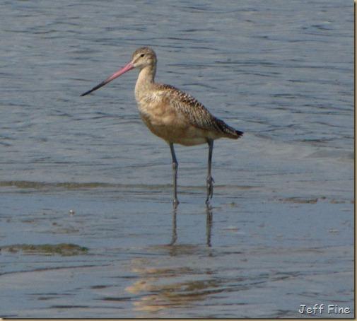 Birding Clamming_036