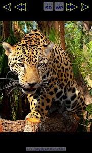 Jaguar Wallpaper Gallery screenshot 4