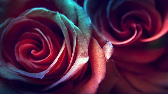 Rose Live Wallpaper screenshot 07