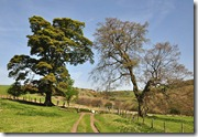 Darnford trees