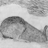 Rabit - drawing fur