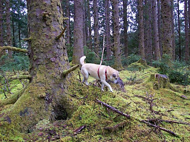 Forest Dog Hunts