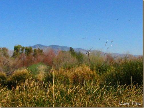 sweetwater wetlands_177
