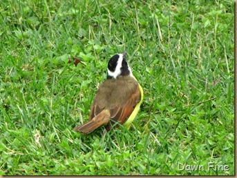 Birding valley nature center_006