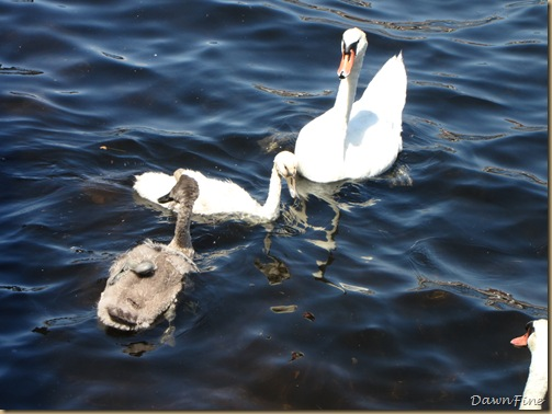 Swans_20090712_002
