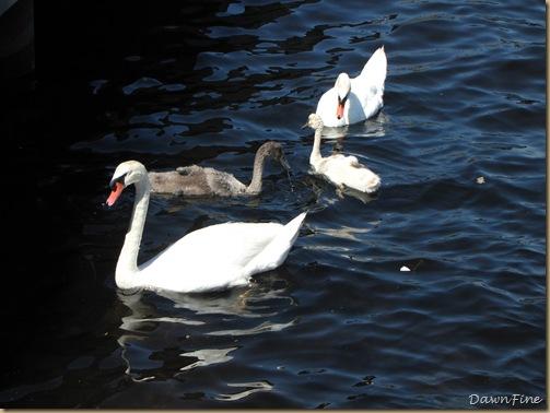 Swans_20090712_029