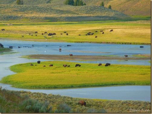 mammoth to yellowstone lake car tour_20090903_118