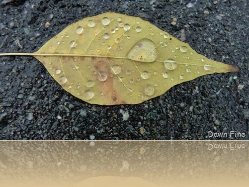 leafy walk_011