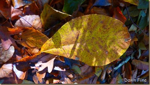 Autumn_038