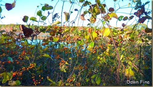 Autumn_019