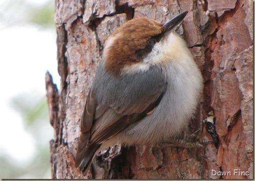 Birds and bark butter_040