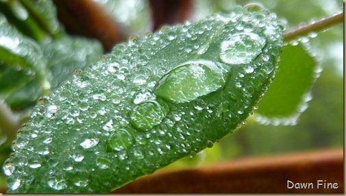 Water droplets and flowers_056