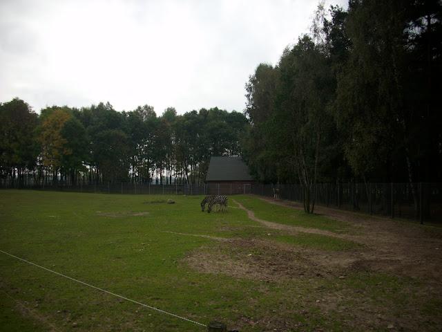 Wybieg zebr Chapmana - widok od południa
