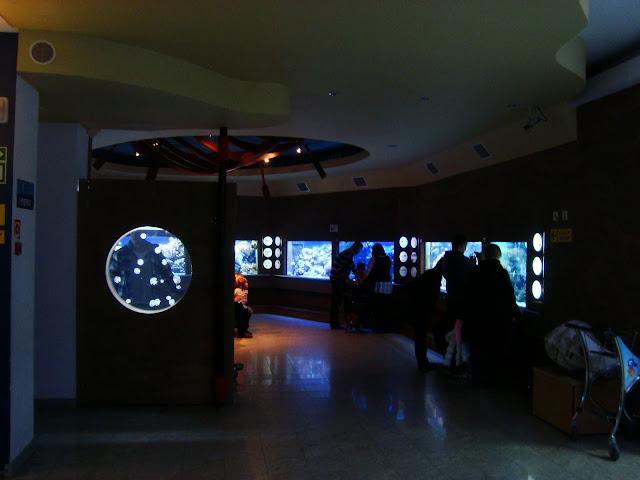 """Sala na I piętrze - """"Rafa koralowa"""", z lewej akwarium z meduzami"""