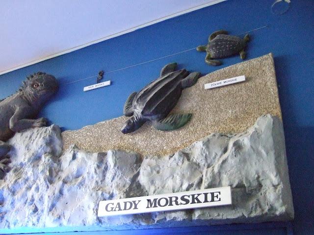Gady morskie na ścianie - Akwarium Gdynia, I piętro