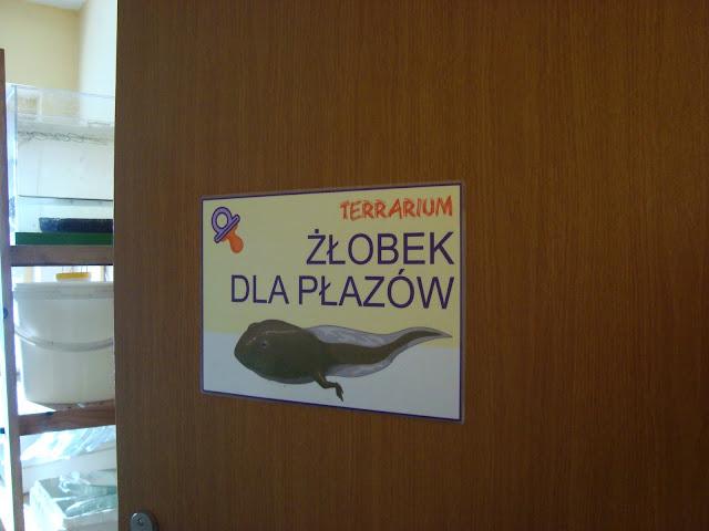 Żłobek dla płazów - zaplecze hodowlane we wrocławskim terrarium