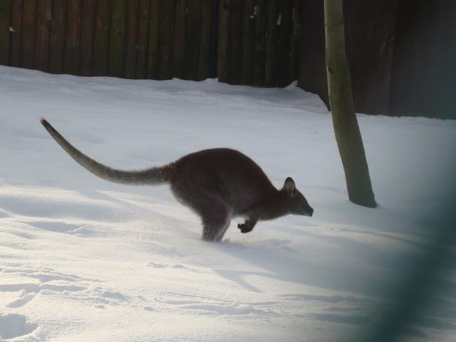 Ciekawe, jak się skacze na śniegu?