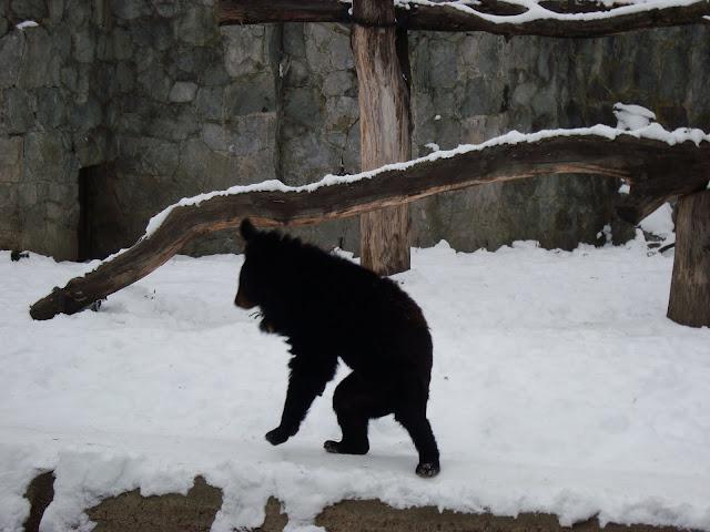 Niedźwiedź?
