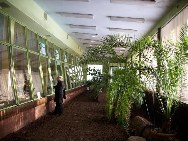 Wnętrze pawilonu małp człekokształtnych