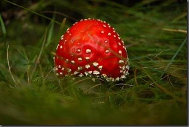 jamur-cantik-1
