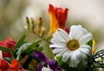 flowers e flores