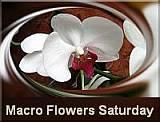 Macro Flowers Saturday badge 4