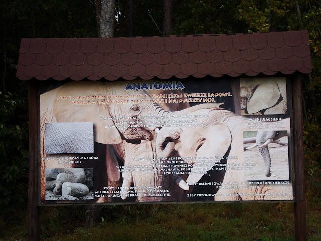 Słoń jaki jest, każdy widzi...
