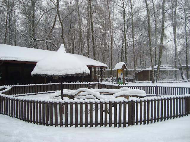 Wszystko przykryte jest śniegiem...