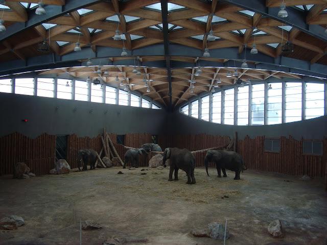 Słoniarnia słoni pełna
