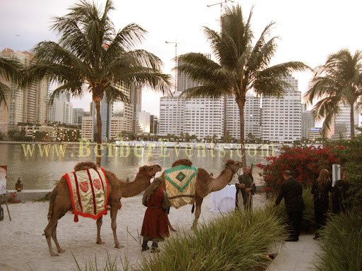 Live Camels for Moroccan Casino nights for a corporate event at the Mandarin Hotel, Miami, Florida