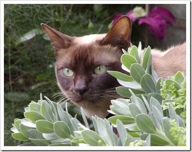 Oscar (Admilbu Meridian Dancer) in the Garden.