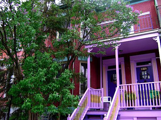 lilac tree + lilac house