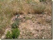 weeds herbs