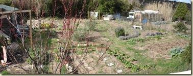 garden panorama 05-03-09