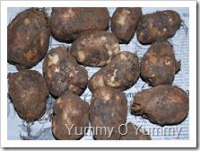 Chinese potato / koorkka