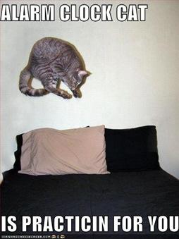 funny-pictures-alarm-cat-clock-practice-bed-jump