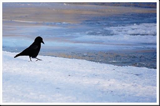 crow walk