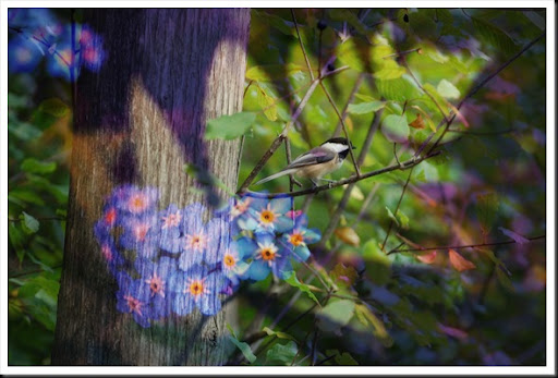 CHICKADEE and Forget me Not