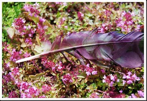 CROW Feather Hydrangea