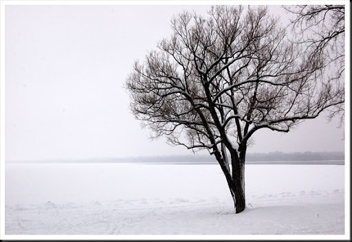 Tree River Snow