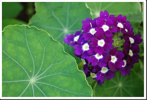 Algonquin Flowers (26)