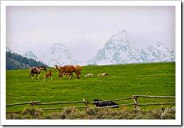 DSC_0057-horses-Tetons-snow-covered