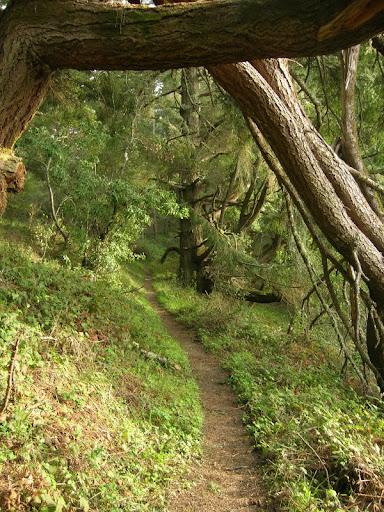 Brook Loop Trail